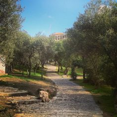 The beautiful pathway to Acropolis and the Parthenon. Walking Athens app, Route 07 - Philopappos Hill (Download for FREE) #travel #guide #iPhone #trees Parthenon, Acropolis, Free Travel, Pathways, Athens, Travel Guide, Walking, Country Roads, App