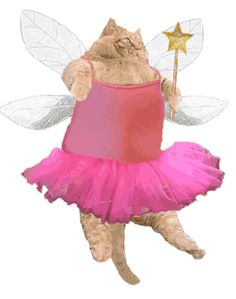 Fairy Kitteh! lol ...been eating too much, cant fly too well...