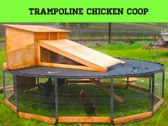 Trampoline Chicken Coop : Now here's an idea I could use our old trampoline for!