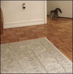 Katzen sind einfach geil :)