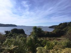 The view from Stewart Island Lodge is pretty hard to beat! Forest Hill, Amazing Destinations, New Zealand, Cruise, Tours, Island, Beach, Water, Pretty