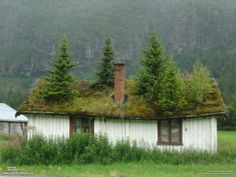 Trees on house in Norway, this is interesting!