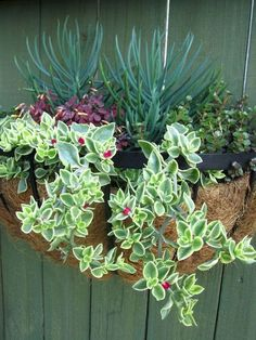 Thrilling About Container Gardening Ideas. Amazing All About Container Gardening Ideas. Succulent Planter Diy, Hanging Succulents, Succulent Gardening, Succulents In Containers, Container Plants, Cacti And Succulents, Hanging Plants, Container Gardening, Organic Gardening