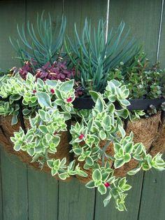 Thrilling About Container Gardening Ideas. Amazing All About Container Gardening Ideas. Succulent Planter Diy, Hanging Succulents, Succulent Gardening, Succulents In Containers, Cacti And Succulents, Container Plants, Hanging Plants, Container Gardening, Garden Plants