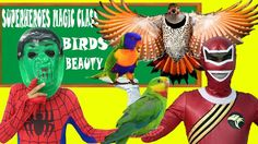 Learn Animal With Beautiful Birds in Superheroes Magic Class! Maleficent...