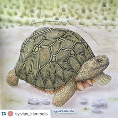#Repost @sylvias_kleursels with @repostapp. ・・・ And mr turtle is ready ☺️ #milliemarotta #animalkingdom #animalkingdomcolouringbook #dierenrijk #dierenrijkkleurboek #sylvias_kleursels #carandachepablo #panpastel