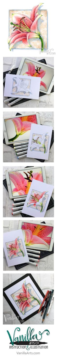 """""""Lily Blossom"""" in Copic and Prismacolor pencil. Vanilla Arts digital stamps are designed especially for markers, colored pencils, and even watercolor! Wide open areas allow you the necessary space to blend and express your creativity. 