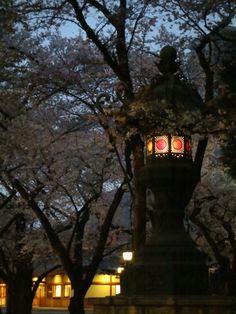 A lantern glows inside the locked gates of the Yasukuni Shrine.