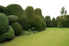 Dekorative Gartengestaltung-Schnitt Ideen Design-geschwungen