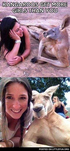 Kangaroos get more girls than you.