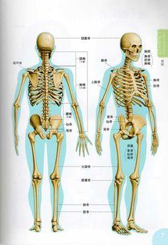 skeleton rear view