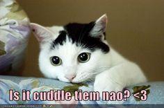 cuddle tiem nao? <3