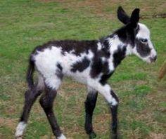 baby donkey....so cute