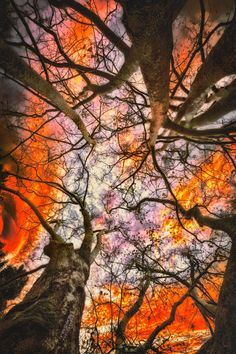 lsleofskye:  Sunset through trees!                                                                                                                                                                                 More