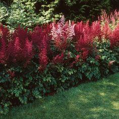 Rot blühende Schattenpflanzen sorgen für Farbe in sonst eher dunkleren Ecken Ihres Gartens.