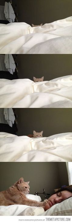 Письмо «Мы нашли новые Пины для вашей доски «котки чудесные».» — Pinterest — Яндекс.Почта