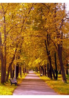 Fall time in Petrozavodsk