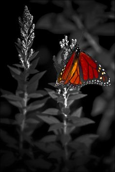 "larri1276: whisperinglover: ""There is nothing in a caterpillar That tells you it's going to be a butterfly"" ~ Belleza"