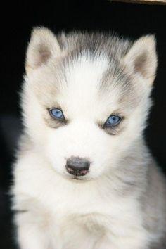 I'm just a little husky...