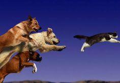 Γιατί οι σκύλοι κυνηγούν τις γάτες;           -            Η ΔΙΑΔΡΟΜΗ ®