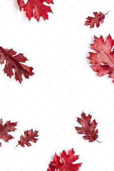 Fall styled stock photography perfect for seasonal sales and website promotion! Red fall leaves.