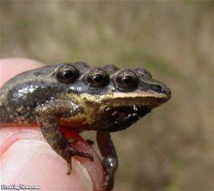 Very Strange Animals You Never Knew Existed (shared via SlingPic)