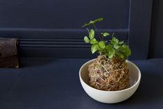 In the tradition of Japanese kokedama—which uses moss to retain moisture instead of a pot—here are instructions for making a self-sufficient houseplant that needs nothing but a bit of water and sun to keep it happy:
