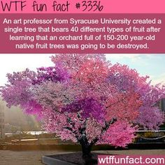 A tree with over 40 fruits - WTF fun facts, is this true, somebody help me research