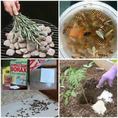 15 Clever Ways to Keep Pesky Bugs Away - One Crazy House Mosquito Yard Spray, Diy Mosquito Repellent, Fly Repellant, Getting Rid Of Bees, Get Rid Of Wasps, Keep Bugs Away, Garden Pests, Fruit Trees, Pest Control