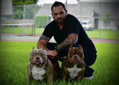 AMERICAN BULLY BREEDERS: VENOMLINE- UPCOMING POCKET BREEDINGS & PUPPIES FOR SALE | BULLY KING Magazine Pocket Bully, Gypsy Rose, Jada, Puppies For Sale, Weekend Is Over, Bullying, Pitbulls, The Past, American Bullies