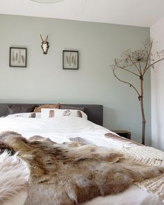New bedroom inspiratie cosy Ideas Interior, Home Bedroom, Feature Wall Bedroom, Bedroom Interior, Bedroom Inspirations, Bedroom Wall, Green Bedroom Walls, Sage Green Bedroom, Green Accent Walls