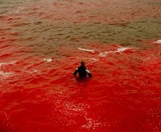 #B61434, red, sea, swim