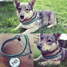 Here is my little buddy wearing his new harness. Ready for work! #paracord #diy…