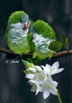black and white color splash happy tuesday pics Kinds Of Birds, All Birds, Cute Birds, Pretty Birds, Beautiful Creatures, Animals Beautiful, Cute Animals, Exotic Birds, Colorful Birds