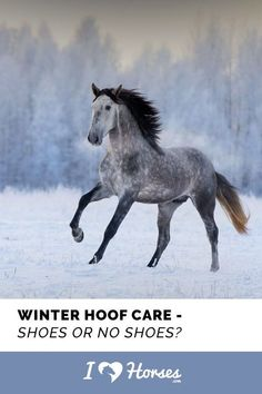 That time of year is approaching, the season that all horse folk dread – winter. Shorter days, colder weather and snow means planning a winter schedule with your farrier. You must decide if you are going to let your horse go barefoot during the winter months or keep shoes on. Here are some things to consider when it comes to putting shoes on your horse this winter. | #horse #horseshoes #equine #equestrian