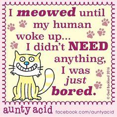 #AuntyAcid I meowed until my human