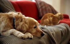 Comportamento de cães e gatos após a castração, cães e gatos castração comportamento, pets castração, cachorros castração, gatos castração