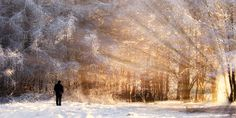 Natural remedies and treatment for people suffering from seasonal affective disorder and winter blues without side effects using Homeopathy. Natural Treatments, Natural Remedies, Health Matters, Homeopathy, Disorders, Blues, Seasons, Side Effects, Winter