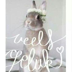 Veels geluk Birthday Wishes, Happy Birthday, Bday Cards, Special Day, Birthdays, Wedding, Animals, Afrikaans Quotes, Hip Hip