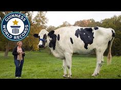 The world's tallest cow dies after a lifetime of Photoshop accusations - Blosom, seen here with owner Patty Meads-Hanson, lost the title of 'tallest living cow' when she died last month. Guinness awarded her the new, even more impressive record of 'tallest cow ever' post-humously on Thursday. (Guinness World Records)