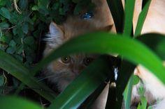 Honey ,Persian cat of my son,Sao Paulo,Brazil. by luiz  coelho on 500px