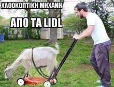 That time is coming up again, at least in the Deep South. Redneck Humor, Animals And Pets, Funny Animals, Greek Memes, Cat Tags, Landscaping Supplies, Lidl, Lawn Mower, Funny Photos