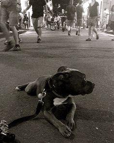 a dog on bourbon #stokelythedog #bourbonstreet #neworleans #nola #bullbreedsofinsta #pittiesofinsta  #pitbullsofficial #dog #puppy #pup #cute #eyes #instagood #pets #animals #petstagram #dogsitting #photooftheday #dogsofinstagram #ilovemydog #instagramdogs #dogstagram #dogoftheday #lovedogs #lovepuppies #adorable #doglover #instapuppy #instadog