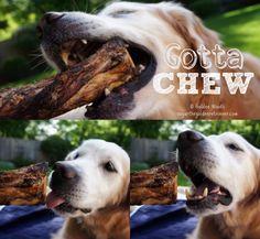 #BestDogEver Gotta Chew