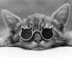 Котёнок в очках-кошечках отдыхает. И Вы не забывайте наслаждаться выходными. :)  #кот, #мимими, #cat, #glasses, #optix_su, #fun, #kittycat