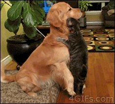 dog trying to pet cat. You have to click on it to see it!