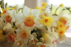 Daffodils at Floret Flower Farm -Erin Benzakein  www.floretflowers.blogspot.com