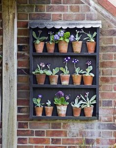 Flanigan Kelley Buchanan Jane have you seen primula auricula theatres? I thought they might suit your little garden :) Small Gardens, Outdoor Gardens, Vertical Gardens, Plant Theatre, Primula Auricula, Seaside Garden, Garden Shelves, Primroses, Flower Pots