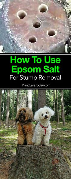 How To Use Epsom Salt For Stump Removal