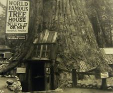 Famous Tree Houses believe it or not | world famous tree house piercy, california